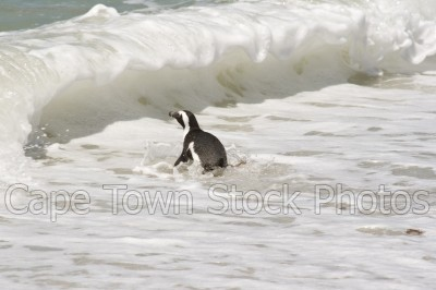 waves,penguins,boulders beach