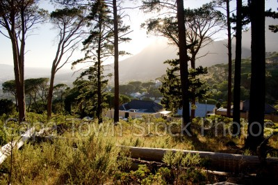 trees,lions head,morning