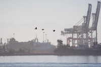 Cranes at Table Bay Harbour [1001235665]