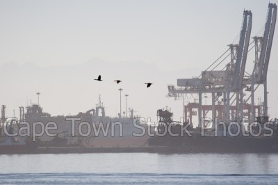 harbour,table bay harbour
