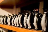 Tiny penguins in a row [1103313558]