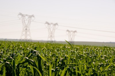 electricity,grass,fields