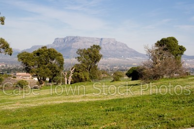 trees,table mountain,park