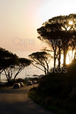 trees,sunset,clifton,silhouette,roads