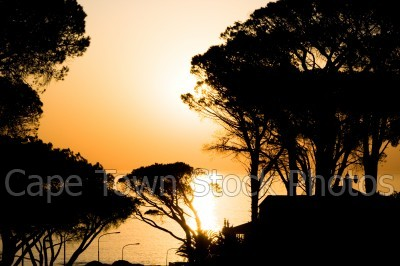 trees,sunset,clifton,silhouette