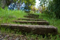 Steps in green grass [1108137704]