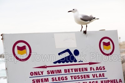 bird,sea,beach,seagulls,signs