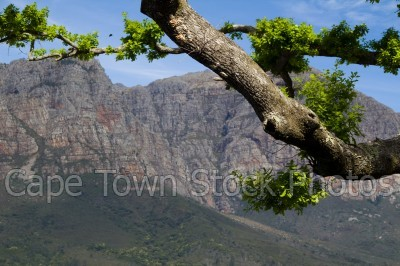 mountain,franschhoek