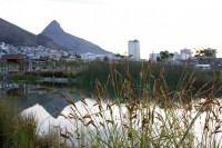 Lion's Head from Green Point Park and Biodiversity Garden [1111191770]