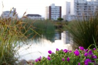 Flowers at Green Point Park and Biodiversity Garden [1111191772]