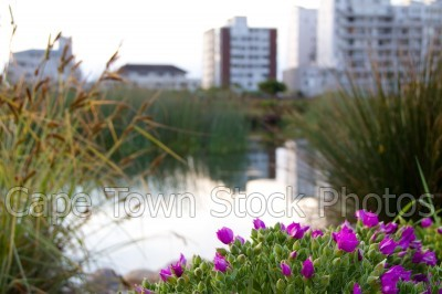 dam,gardens,buildings,flowers