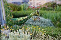 Praying mantis at Green Point Park and Biodiversity Garden [1111191773]