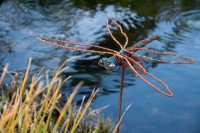 Dragonfly Green Point Park and Biodiversity Garden [1111191776]