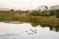 Fish at Green Point Park and Biodiversity Garden [1111191781]