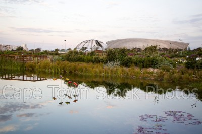 reflection,dam,gardens,fish,cape town stadium