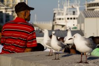 Seagulls at the V&A Waterfront [1112263855]
