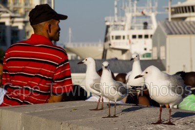 v&a waterfront,man,people,seagulls