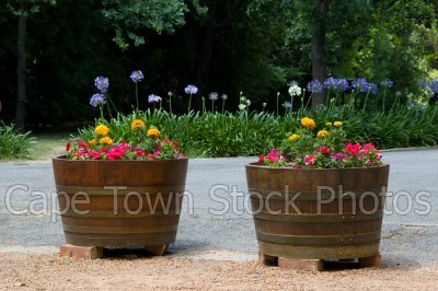 barrel,flowers