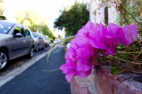 Purple bougainvillea in the street [1202055555]