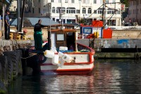 Fishing boat in kalk bay [1203046244]