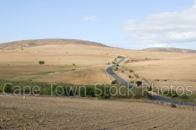 bush,landscape,fields,roads
