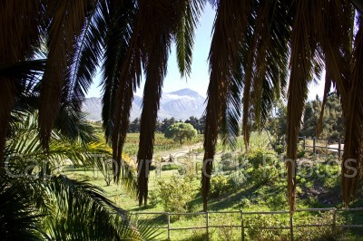 mountain,landscape,palm tree,view