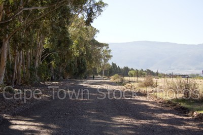trees,gravel,tulbagh,roads