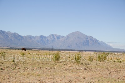 mountain,landscape,countryside,tulbagh