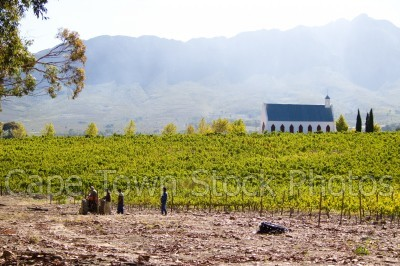 african,mountain,countryside,vineyard,tulbagh,workmen,workers,tractor,churches