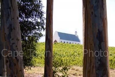 trees,vineyard,tulbagh,churches