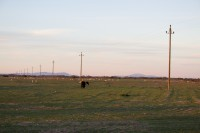 Telephone poles in an open field at sunset [1205278463]