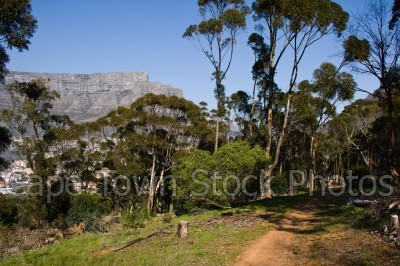 trees,table mountain,hiking