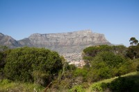 Green bushes with Table Mountain background [1206168743]