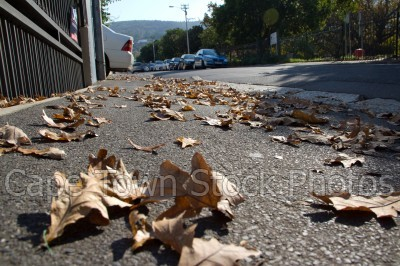 pavement,leaves,autumn,tamboerskloof