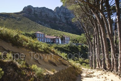 trees,table mountain,fynbos,buildings