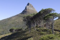 Signal hill from the Pipe Track trail [1301274239]