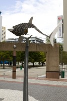 Metal shark sculptures in Cape Town [1302104366]