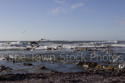 sea,beach,rocks,seagulls,sea point