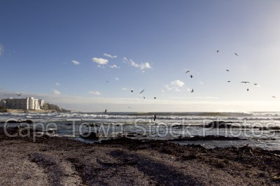 sea,beach,seagulls,sea point