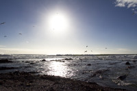 Afternoon sun and seagulls at Sea Point beach [1303294827]