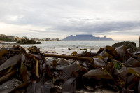 Seaweed and Table Mountain from Big Bay [1303314873]