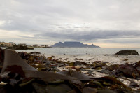 Seaweed and Table Mountain from Big Bay [1303314874]