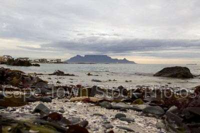 sea,beach,table mountain,big bay,table view,seaweed