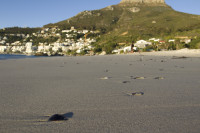 Lion's Head from Clifton Beach [1304044994]