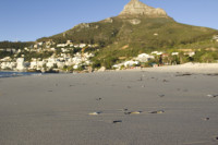 Lion's Head from Clifton Beach [1304044995]