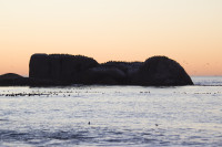 Birds silhouetted on rocks at sunset [1304045065]