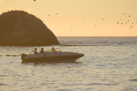 Speedboat and birds at sunset [1304055172]