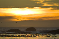 Birds flying into the sunset at Clifton [1304055216]