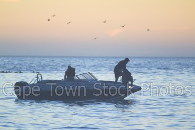 bird,sea,people,sunset,water sport,speedboat