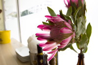 Pink protea flower on white background [1308247070]